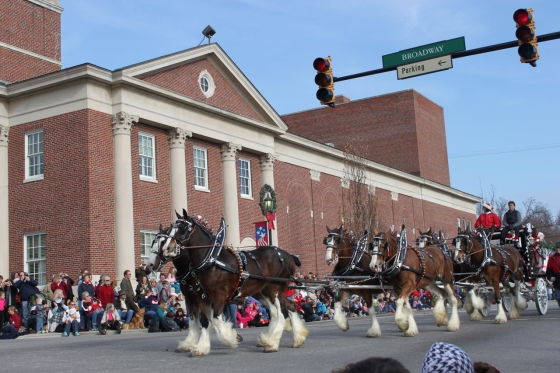 Love this big guys, they come at the end of the parade. and guess what?! The OFFICIAL BUDWEISER CLYDESDALES ARE COMING THIS YEAR! WOOT!
